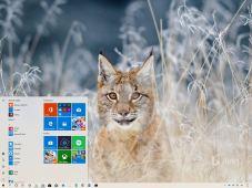 Bing Animals theme for Windows 10