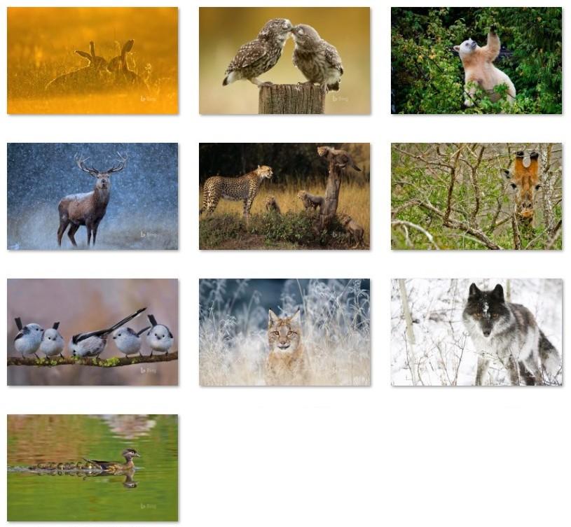 Bing Animals wallpapers