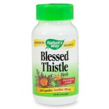 Blessed Thistle- Take with Fenugreek if you're milk supply is low.