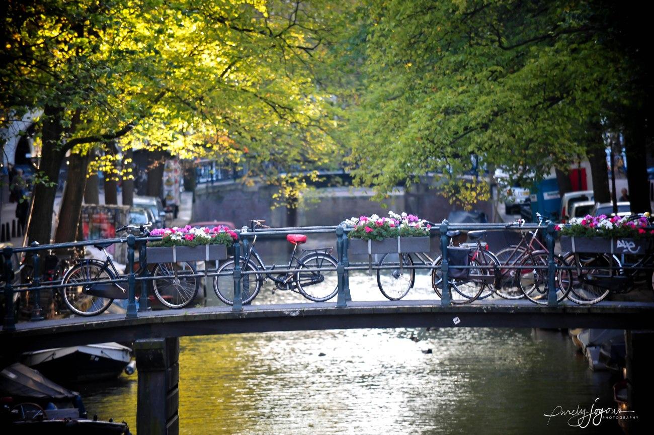 amsterdam 2012-1-18