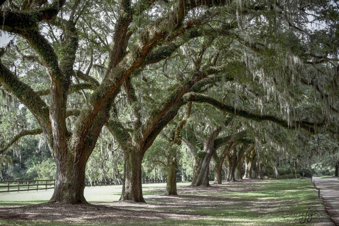 bonadventure cemetery, savannah-1-20