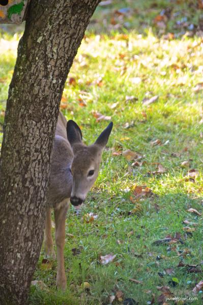 deer (3)
