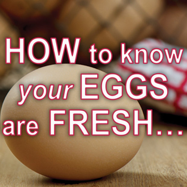 How to know your eggs are fresh…