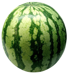 watermelon transparent purepng android