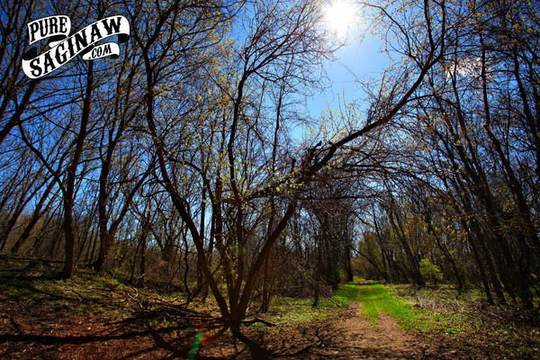 Imerman Park Saginaw County Spring
