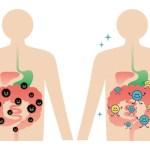 膳食纖維的組成真奇妙!膳食纖維是什麼?哪些食物中富含膳食纖維?