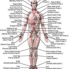 Foot Pulses Diagram 1993 Honda Civic Fuse Life Pulse Massage Amdor Avec Qi Gong Dynamiqueenseignes Par Aisha Dynamique