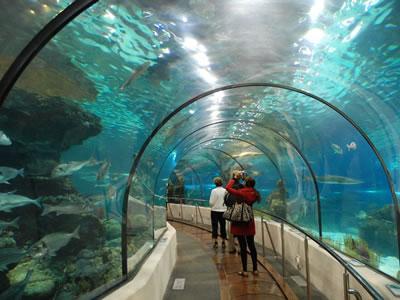 Aquarium water treatment