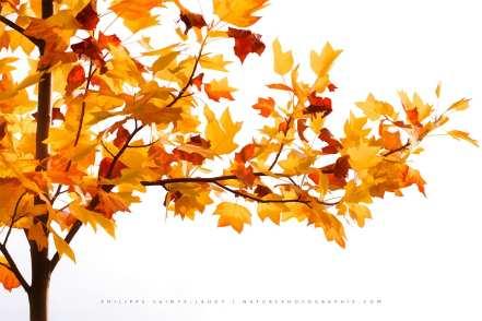 PSL-Fall-Time