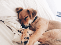 Why You Should Let Dogs Sleep in the Bed - PureWow