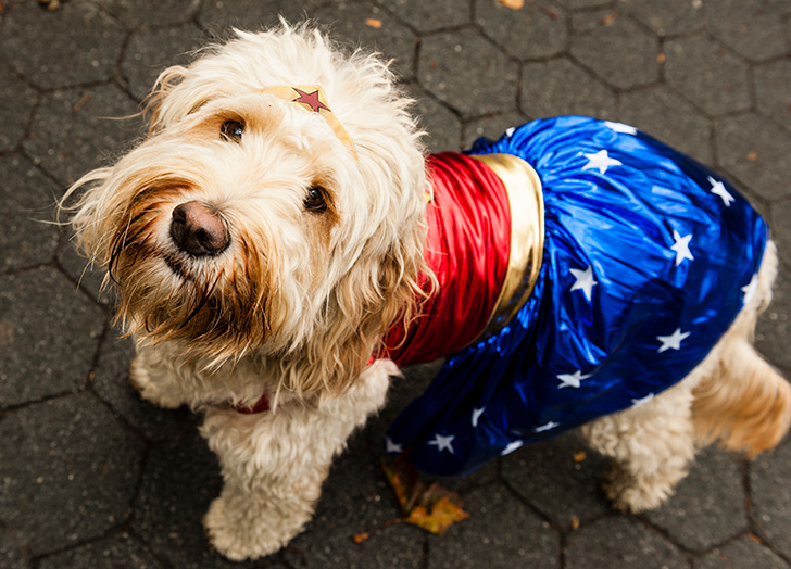 The 38 Best Halloween Costumes for Dogs
