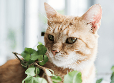 28 Cat Friendly Plants Safe For Your