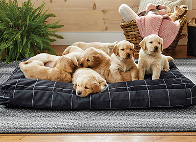 10 indestructible dog beds purewow