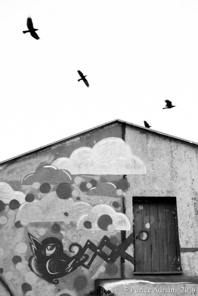 painted bird looks at free birds