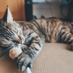 Best Purifier for Cats