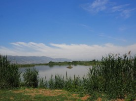 Genezareth, Israel, puriy