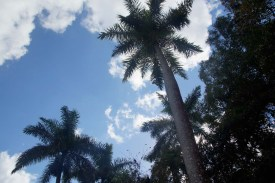 puriy-reiseblog-trinidad-31