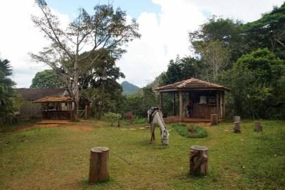 puriy-reiseblog-trinidad-32
