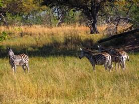 Bush Walk im Okavango Delta