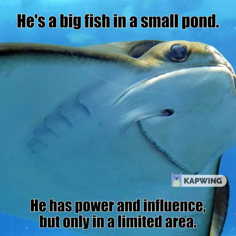 He's a big fish in a small pond.