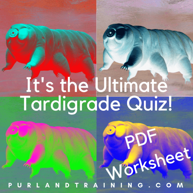 The Ultimate Tardigrade Quiz! - printable PDF worksheet