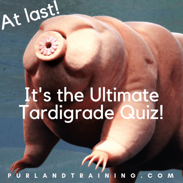 At last! It's the Ultimate Tardigrade Quiz - 50 Questions!
