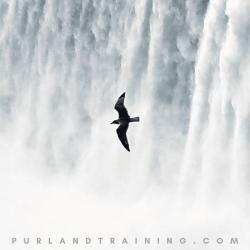 A bird flies across a waterfall