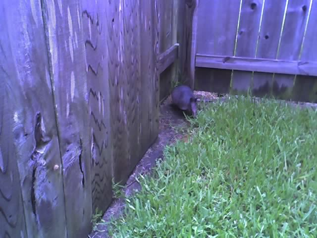 Our little backyard visitor