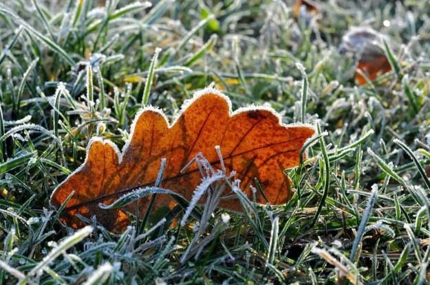 leafinfrost