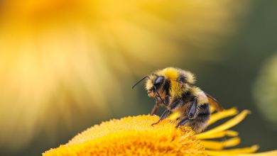 Photo of How to Create a Bee-Friendly Garden