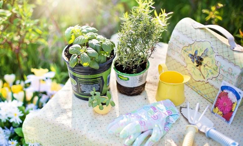 Photo of Best Medicinal Plants To Grow In Your Garden