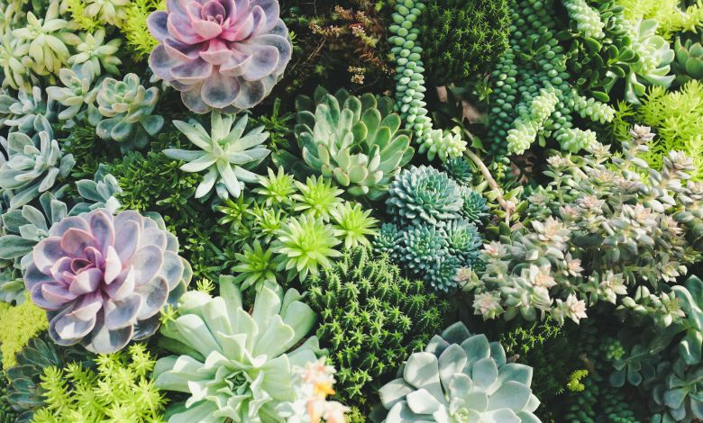 Photo of How to Properly Care for Indoor Succulents