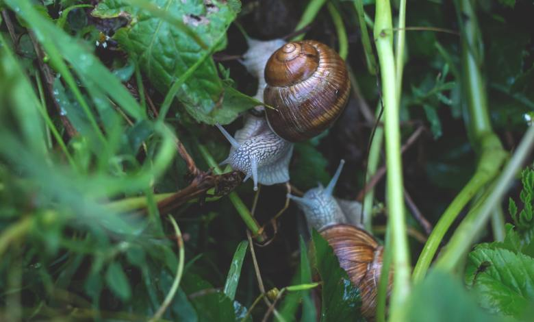 Photo of How to Keep Slugs and Snails Out of Your Garden