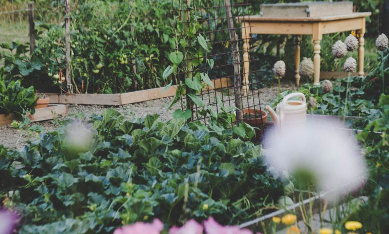 Photo of Companion Planting for Food Gardens