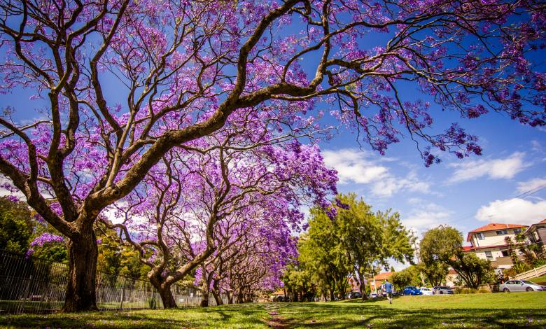 7 Seductive Trees with Purple Flowers