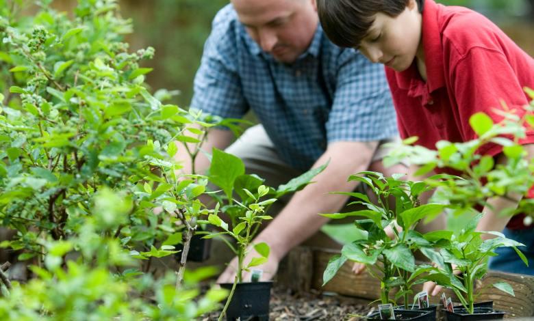 Photo of How to Start an Herb Garden