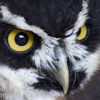 photo - black and white spectacled owl