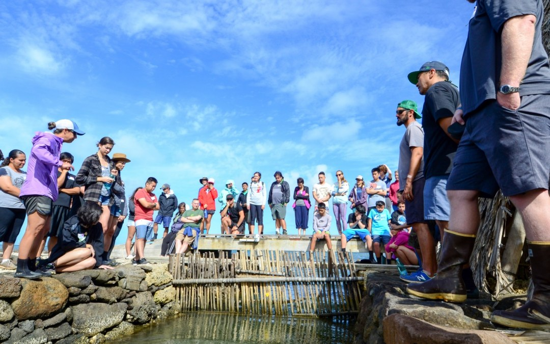Piko ʻAumakua: Building Empathy & Forging Roots in the Connections Phase