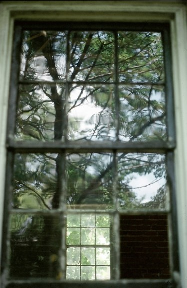Tree reflected in old window.
