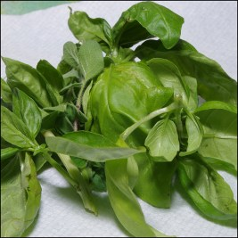 Fresh Basil & Fresh Oregano