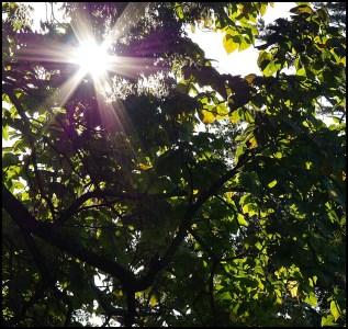 Sun Flare, early morning