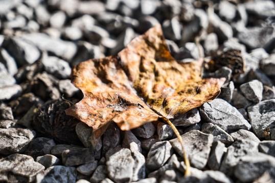 Orange leaf on gravel