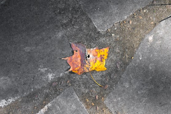 orange leaf on concrete
