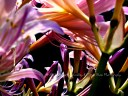 Soft Spring--A copyright