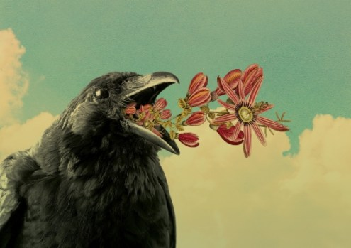 Surrealist collage of a crow splitting pink flowers with a sky as a landscape.