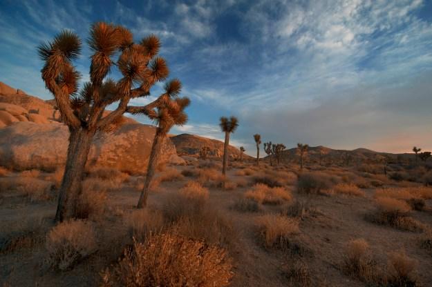 Dream: Joshua Tree National Park - Purpose Driven Mastery