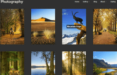 Photography- Gallery page with grid view in portrait orientation