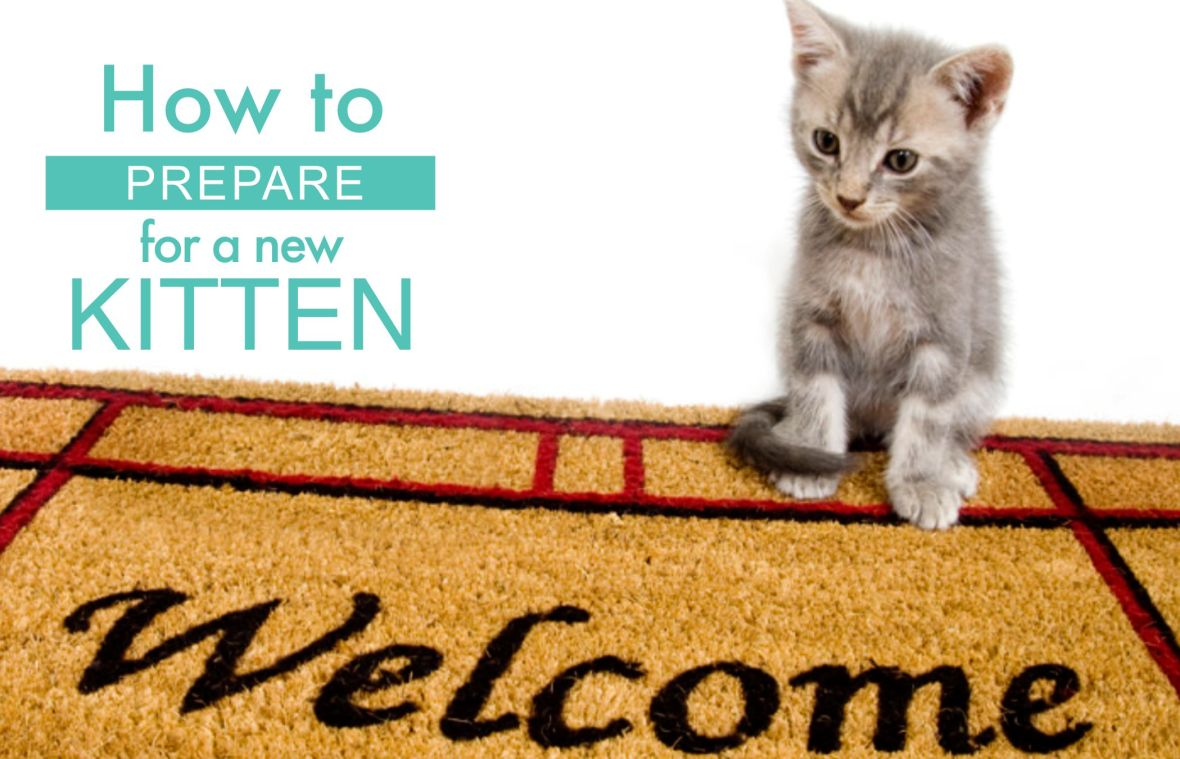 how to prepare for a new kitten 1