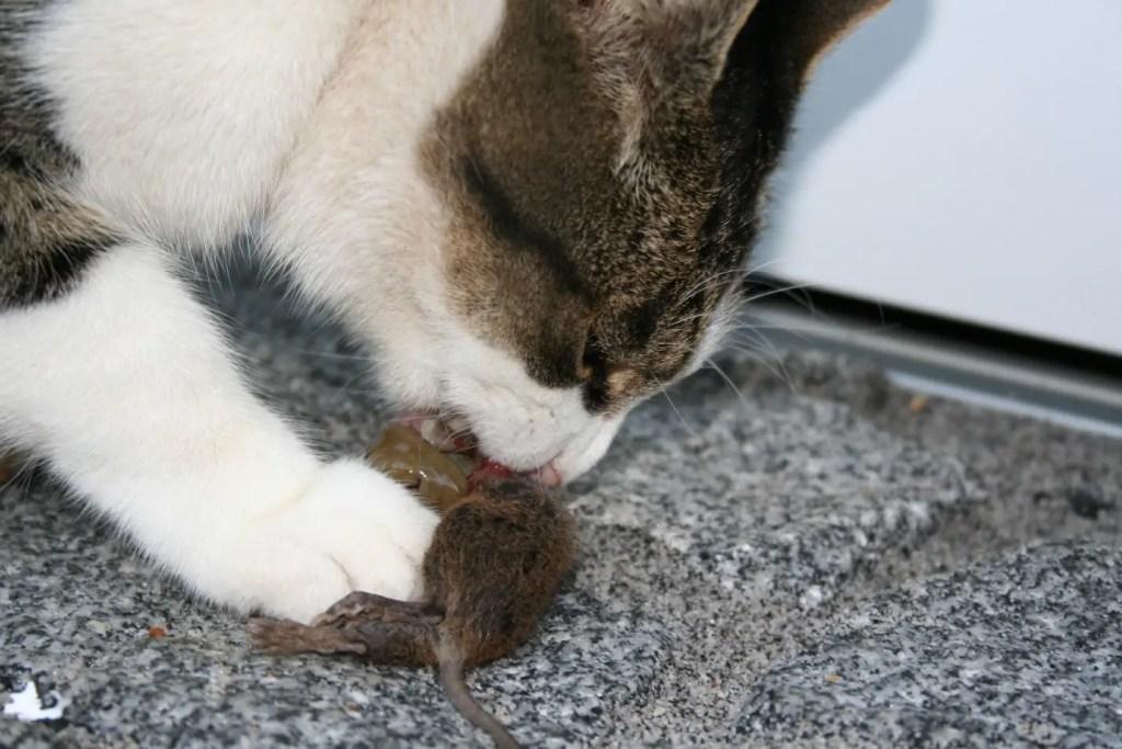 Natural Cat Diet