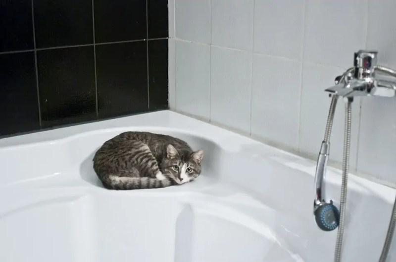 Cats Bathroom